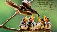 CUVÂNTUL IERARHULUI De ce nu ești fericit?! Duminica a III-a după Rusalii (Despre grijile vieții − Mt. 6, 22-33) Ești sănătos și viguros și nu ești fericit? Păi, atunci, cel […]